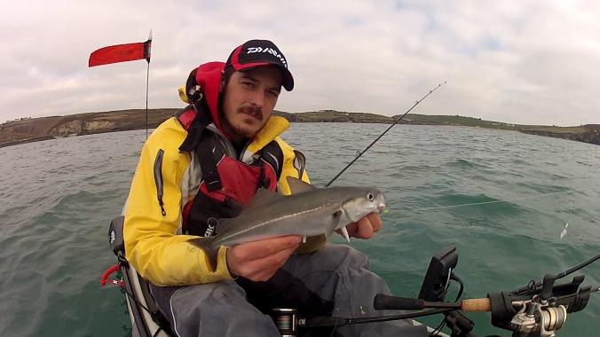 Coalfish